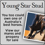 Young Star Stud