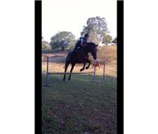 Sweetheart Allrounder /Trail Horse