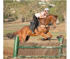 big bold showjumper ruduced to sell