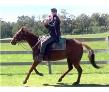 Handy Red QH Mare +VIDEO++