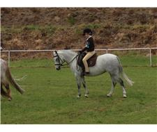 Wanted- Show/Dressage pony