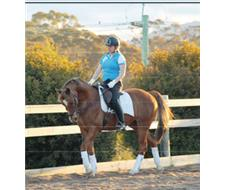 OAKEY - Registered Stock Horse Gelding