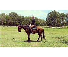 QUIET 4 YR BAY STOCKHORSE MARE