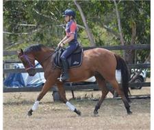 Quality ASG Gelding
