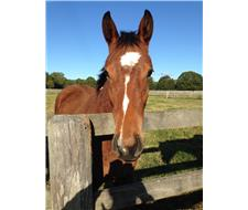 Poppy, 5yo TB mare, never raced
