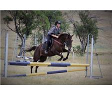 15hh reliable, adaptable all-rounder