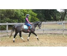 Quality Off the Track Gelding