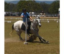 SUPER ATHLETIC CHAMPION SPORTING HORSE