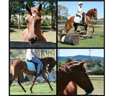 Beautiful chestnut riding pony mare