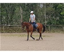 Thoroughbred Mare Dressage Prospect