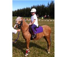Registered Part Welsh / Riding Pony