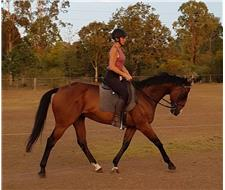 Exceptionally Steady Gelding