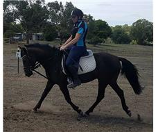 Performance Dressage Pony