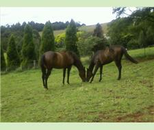2 BREEDING MARE SELLING AS A PACKAGE
