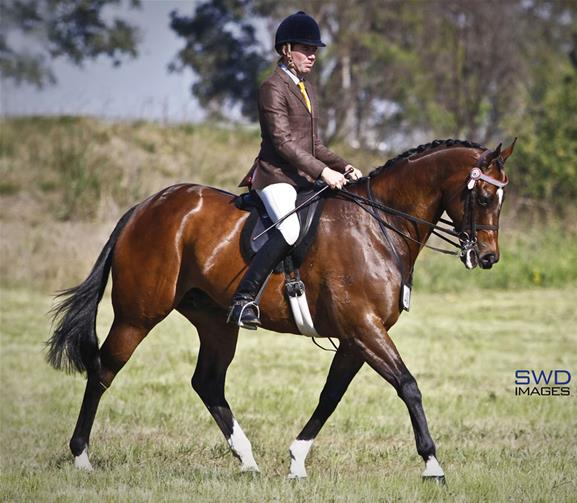 Stunning Large Hack Top Horse
