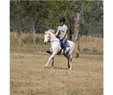 RIDDEN MARES AND PONY BROODMARE