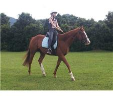 Beautiful Allrounder Chestnut Gelding