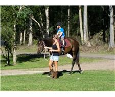 16.3hh Gentle Giant Thoroughbred Mare