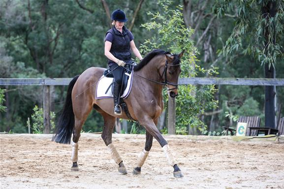 Newcomer –Dressage  Performance horse