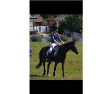 Kids pony Thorwood swagman