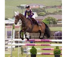 Showjumping eventing warmblood mare