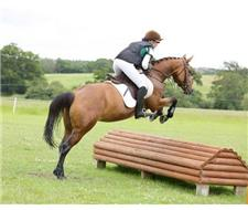 5yrs14.2 hands Connemara Mare Horse