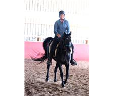 Tall Black 15.2 Egyptian Gelding
