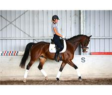 Ideal Young Rider Dressage Mount