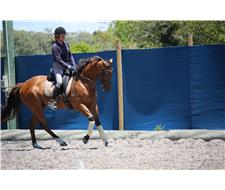Russian Lights potential Dressage/ARC