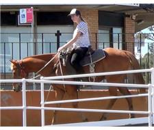 Quality Red Stock Gelding + VIDEO+