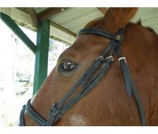 Leather brow band and bridle