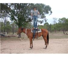 Quiet Quarter horse riding gelding.