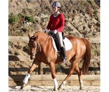 Kasperrado Duke 5yr old warmblood