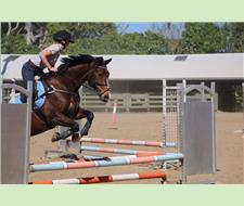 Reduced- or lease to buy- SJ/dressage