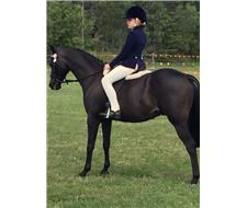 Pretty 13.2hh Pony All Rounder