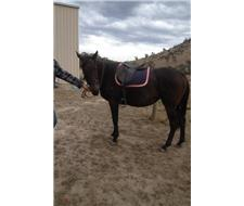 ARC Mount/ Allrounder Mare