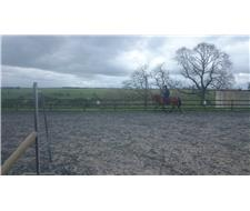 Reduced price pretty mare