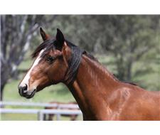 Beautiful and elegant yearling filly