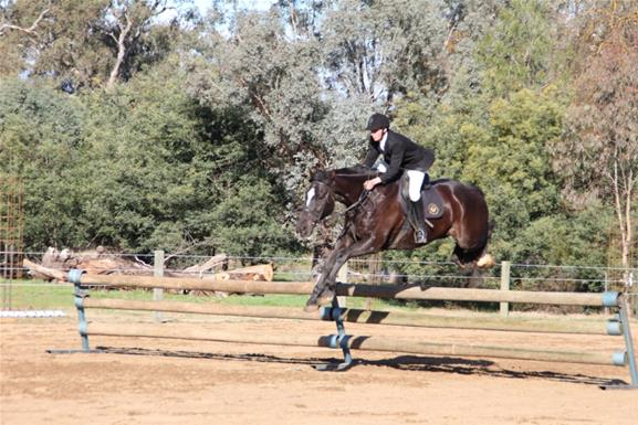 Clydesdale Cross Show Hunter Top Horse