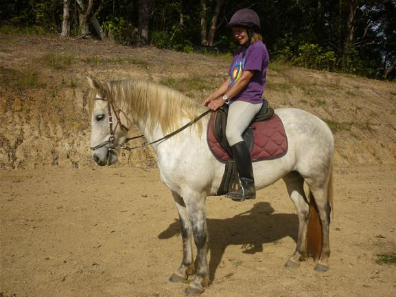 Andalusian Cross Thoroughbred Mare Top Horse