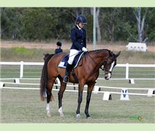 Competitive Dressage, safe and gentle