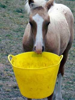 nutritional requirements for specific horses Return to dr getty's free shipping store homepage visit getty equine nutrition homepage  requirements for horses  specific health issues:.