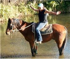 Sensible QUiet Stock Gelding + VIDEO+