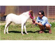 Pixie Valley Hoola Hoop Filly Pinto
