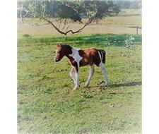 Mare and Colored Foal For Sale