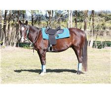 BEAUTIFUL QH X ASH FOR SALE