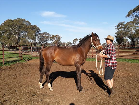 Mighty Magic gelding SOLD