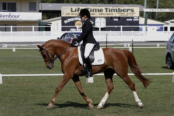 Stunning Pony Dressage Star Top Horse