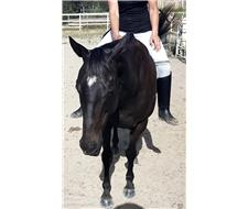 X 3 BOMBPROOF QUIET RIDING HORSES