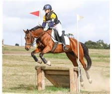 Dream Eventing Schoolmaster